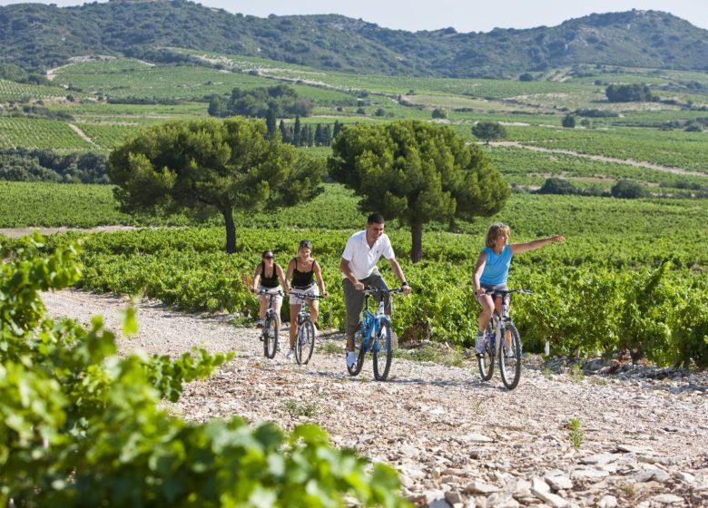 Visite Loisirs Récréatifs : VTT, Vignes et Découvertes