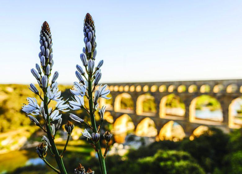 Séjour : Pays d'Uzès Pont du Gard – Destination romaine